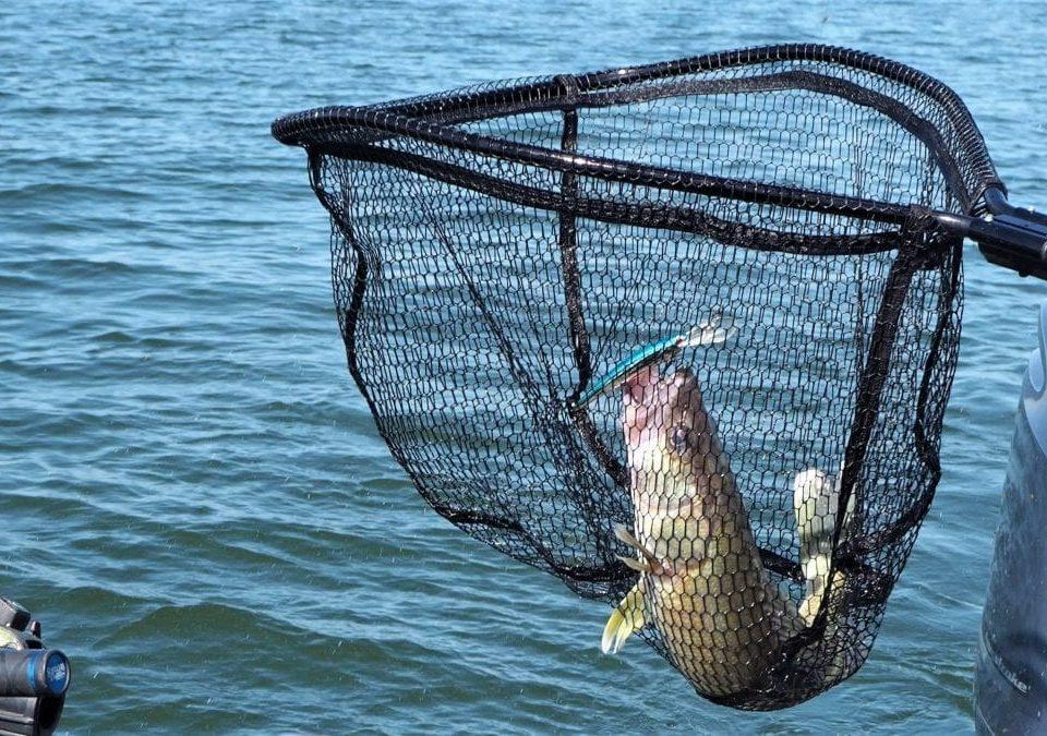 اندازه سوراخ تور ماهیگیری
