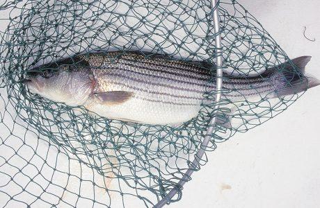 تور ماهیگیری پلاستیکی